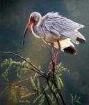 DLaFogg-Everglades Vision (1094x1280)