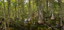 Big Cypress Panorama 3_GRAUER (1500x725)