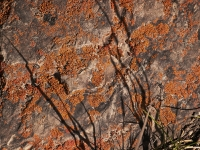 candy-childrey-orange-lichens-and-shadows-dba-2013