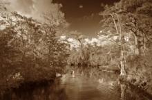 Kitching Creek_GRAUER (1500x984)
