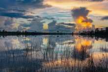 Sunset Pine Glades Lake_GRAUER (1500x1000)