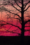 Tree-at-Sunset.jpg