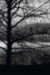 Winter-Cypress.jpg